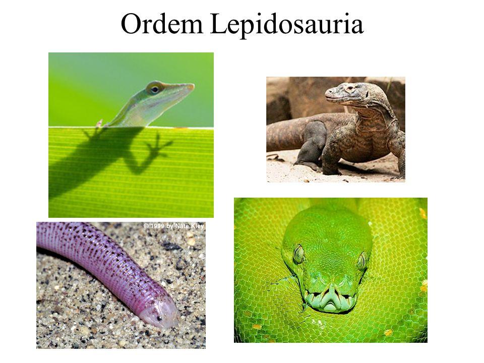 Ordem Lepidosauria