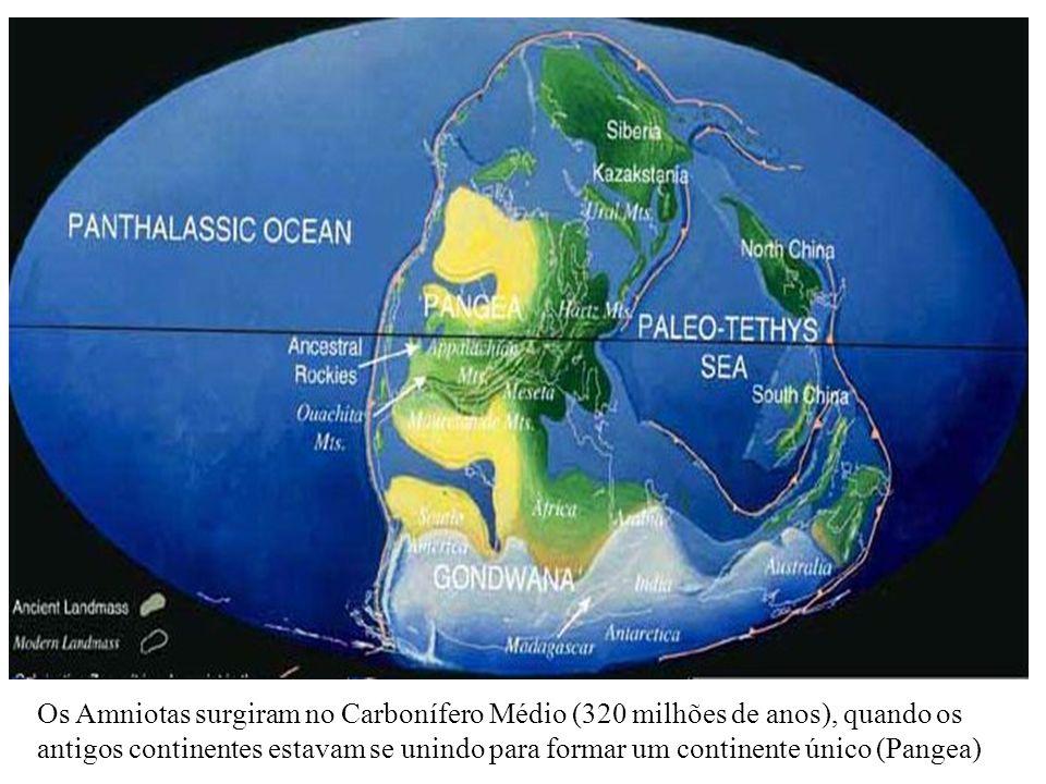 Os Amniotas surgiram no Carbonífero Médio (320 milhões de anos), quando os antigos continentes estavam se unindo para formar um continente único (Pang