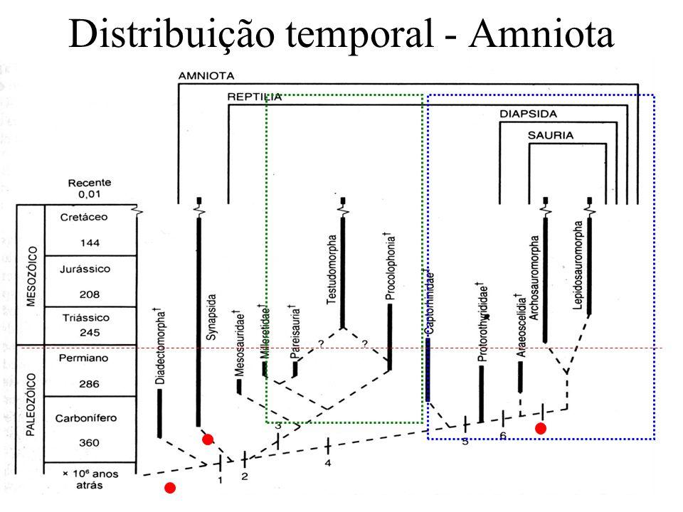 Ovo amniótico Anexos embrionários: Saco vitelínico (também presente em peixes e anfíbios) - Nutrição Córion (membrana externa) - proteção e trocas gasosas Âmnion – (membrana interna) - envolve uma bolsa com líquido amniótico, que protege o embrião.