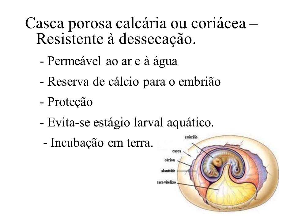 Casca porosa calcária ou coriácea – Resistente à dessecação. - Permeável ao ar e à água - Reserva de cálcio para o embrião - Proteção - Evita-se estág