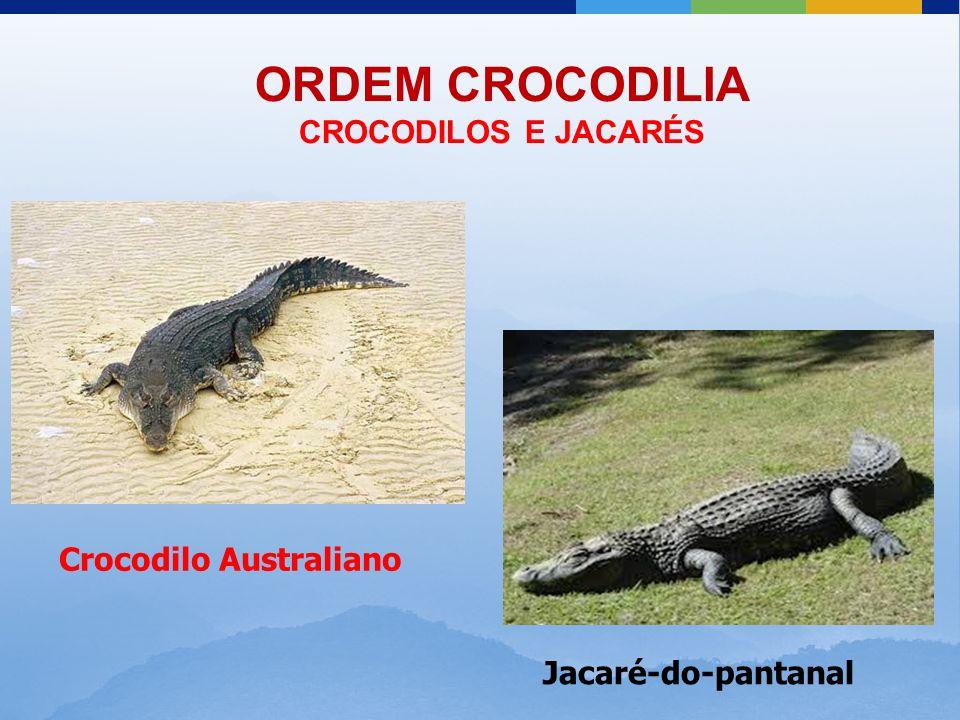 ORDEM CROCODILIA CROCODILOS E JACARÉS Crocodilo Australiano Jacaré-do-pantanal