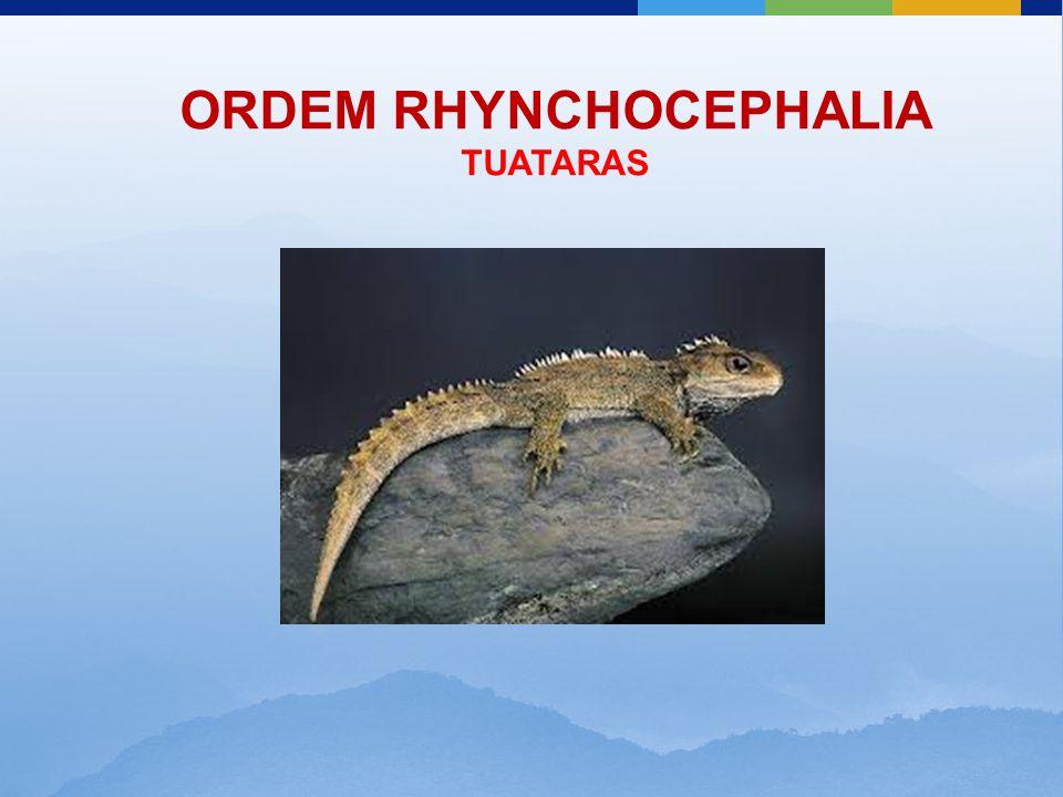 ORDEM RHYNCHOCEPHALIA TUATARAS