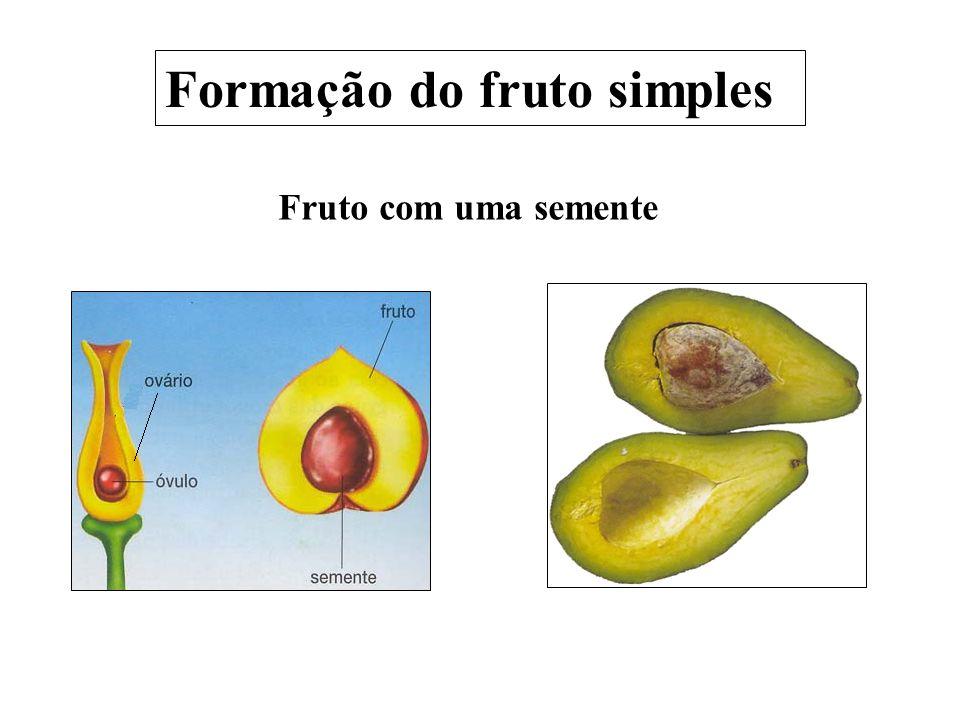 Formação do fruto simples Fruto com uma semente