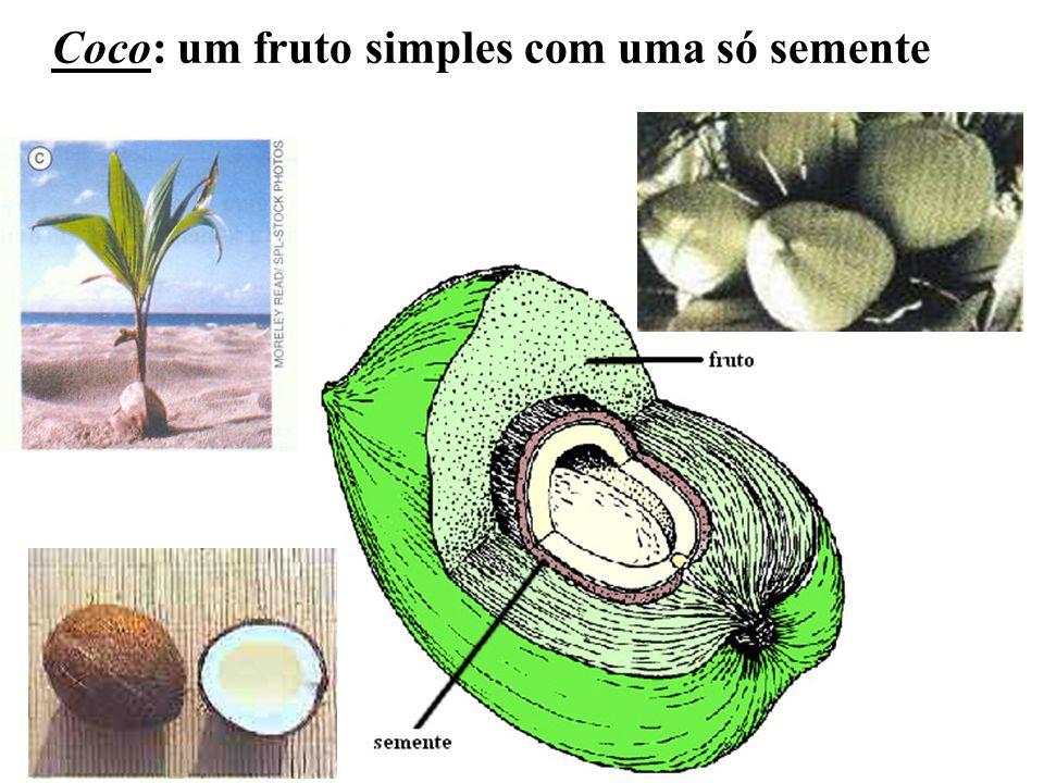 Coco: um fruto simples com uma só semente