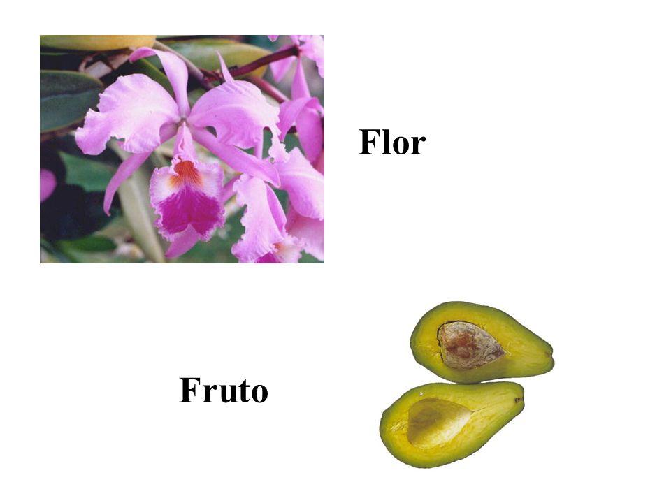 orquídea Flor Fruto