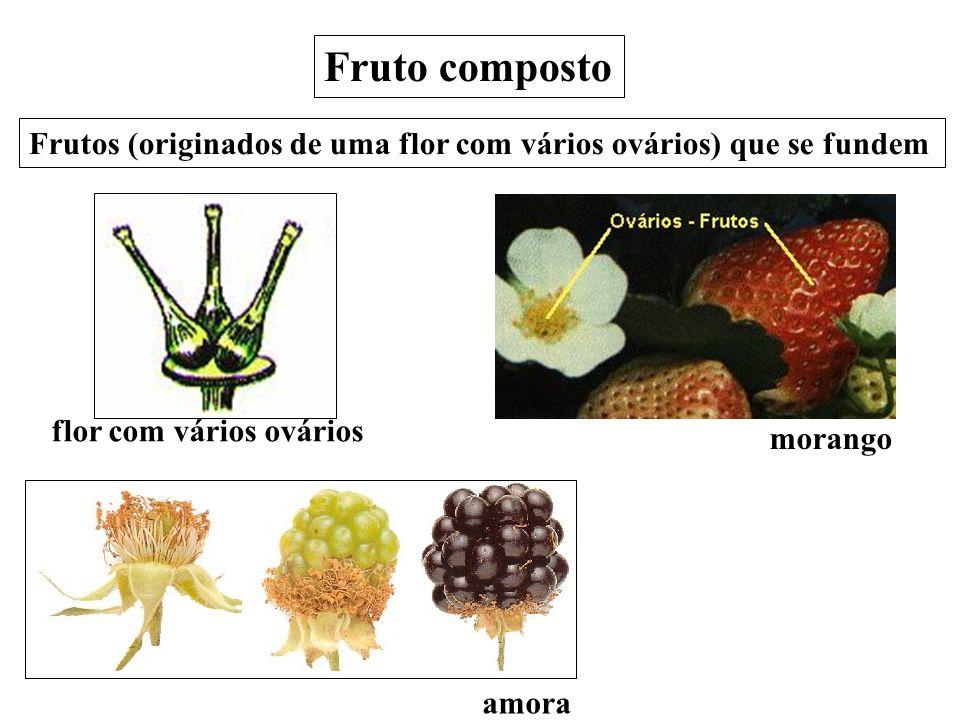 amorafigo morango Fruto composto Frutos (originados de uma flor com vários ovários) que se fundem flor com vários ovários