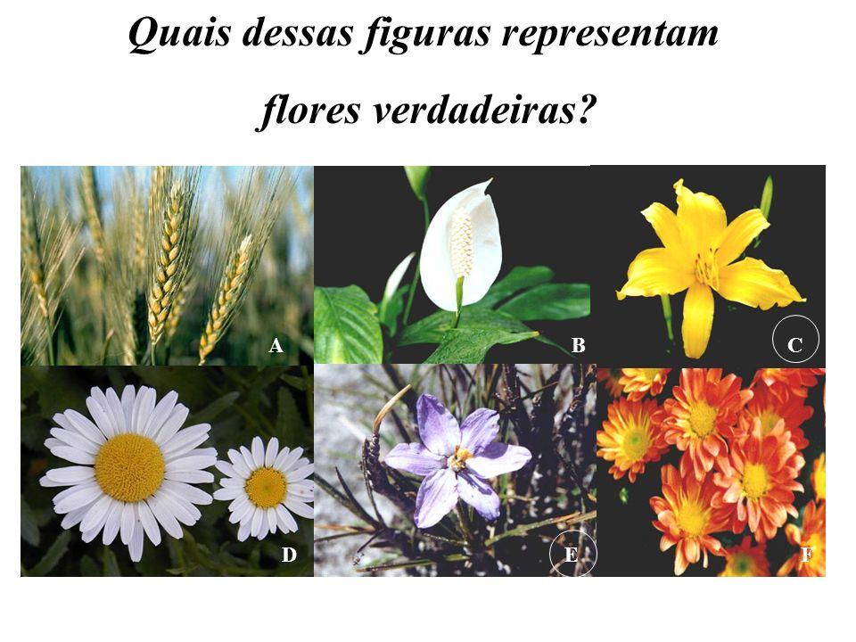 BCA FED Quais dessas figuras representam flores verdadeiras?
