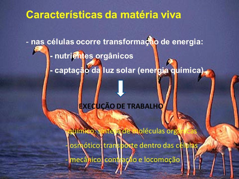 Características da matéria viva - nas células ocorre transformação de energia: - nutrientes orgânicos - captação da luz solar (energia química) EXECUÇÃO DE TRABALHO -químico: síntese de moléculas orgânicas - osmótico: transporte dentro das células - mecânico: contração e locomoção