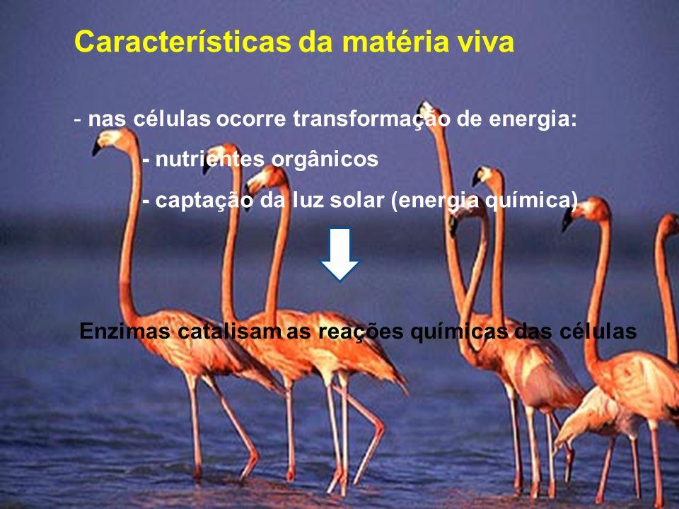 Características da matéria viva - nas células ocorre transformação de energia: - nutrientes orgânicos - captação da luz solar (energia química) Enzimas catalisam as reações químicas das células