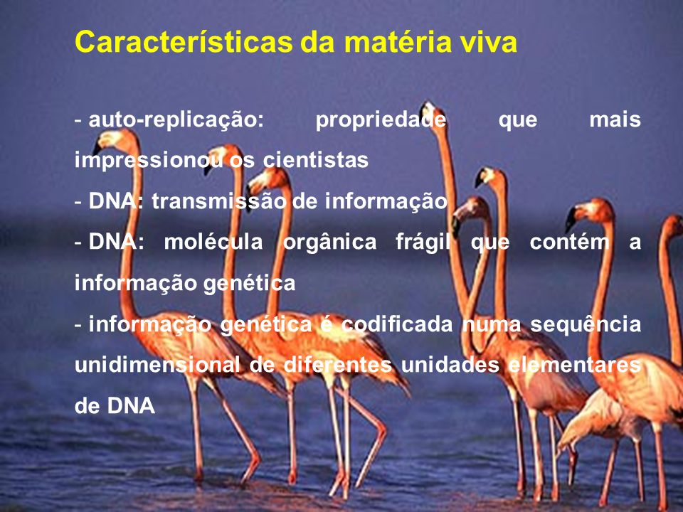 Características da matéria viva - auto-replicação: propriedade que mais impressionou os cientistas - DNA: transmissão de informação - DNA: molécula orgânica frágil que contém a informação genética - informação genética é codificada numa sequência unidimensional de diferentes unidades elementares de DNA
