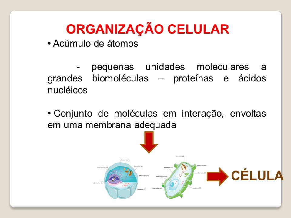 ORGANIZAÇÃO CELULAR Acúmulo de átomos - pequenas unidades moleculares a grandes biomoléculas – proteínas e ácidos nucléicos Conjunto de moléculas em interação, envoltas em uma membrana adequada CÉLULA