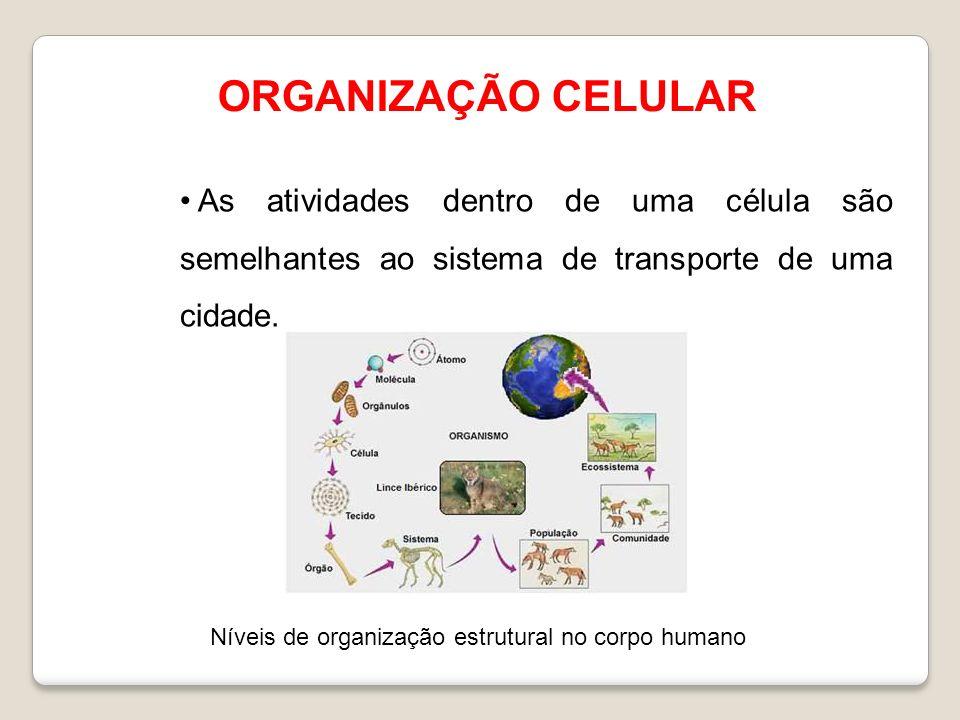 ORGANIZAÇÃO CELULAR As atividades dentro de uma célula são semelhantes ao sistema de transporte de uma cidade. Níveis de organização estrutural no cor