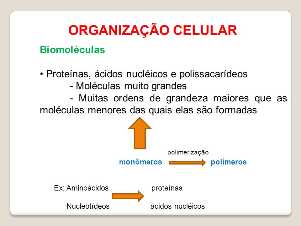 ORGANIZAÇÃO CELULAR Biomoléculas Proteínas, ácidos nucléicos e polissacarídeos - Moléculas muito grandes - Muitas ordens de grandeza maiores que as moléculas menores das quais elas são formadas monômerospolímeros polimerização Ex: Aminoácidos proteínas Nucleotídeos ácidos nucléicos