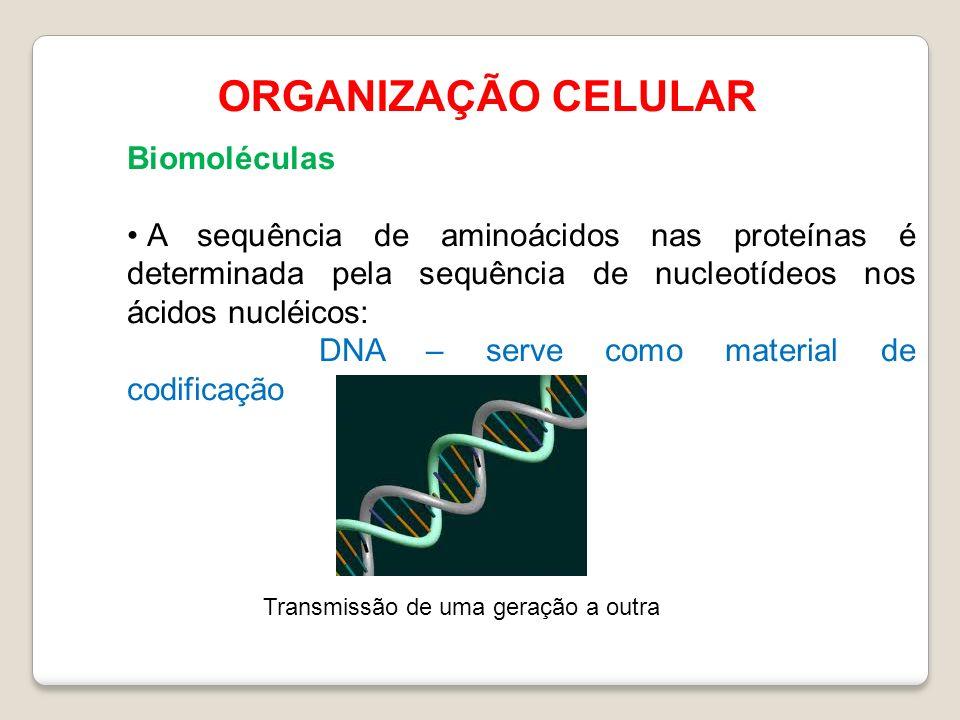 ORGANIZAÇÃO CELULAR Biomoléculas A sequência de aminoácidos nas proteínas é determinada pela sequência de nucleotídeos nos ácidos nucléicos: DNA – serve como material de codificação Transmissão de uma geração a outra