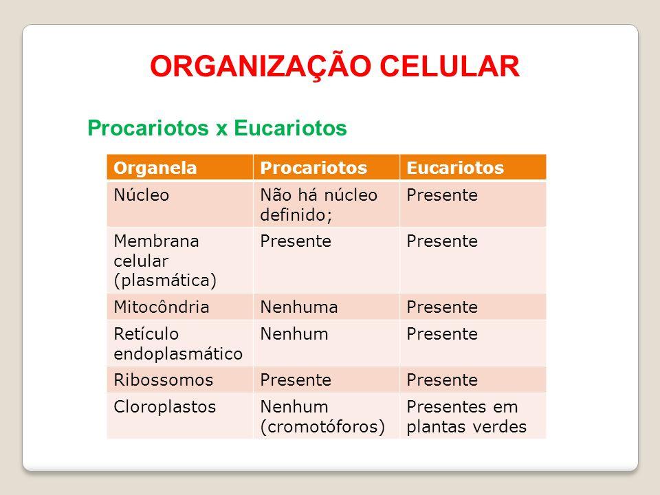 ORGANIZAÇÃO CELULAR Procariotos x Eucariotos OrganelaProcariotosEucariotos NúcleoNão há núcleo definido; Presente Membrana celular (plasmática) Presente MitocôndriaNenhumaPresente Retículo endoplasmático NenhumPresente RibossomosPresente CloroplastosNenhum (cromotóforos) Presentes em plantas verdes