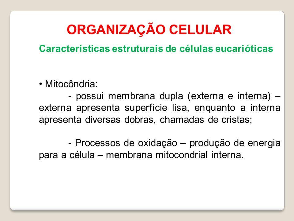 ORGANIZAÇÃO CELULAR Características estruturais de células eucarióticas Mitocôndria: - possui membrana dupla (externa e interna) – externa apresenta superfície lisa, enquanto a interna apresenta diversas dobras, chamadas de cristas; - Processos de oxidação – produção de energia para a célula – membrana mitocondrial interna.