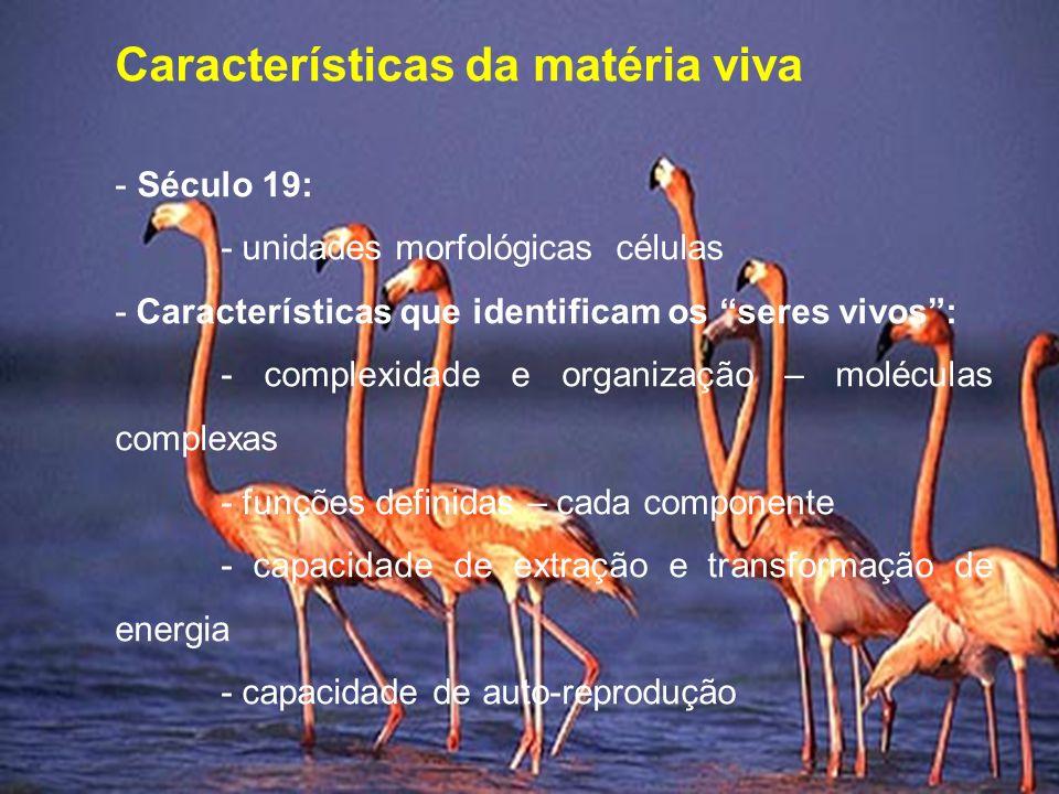 Características da matéria viva - Século 19: - unidades morfológicas células - Características que identificam os seres vivos: - complexidade e organi