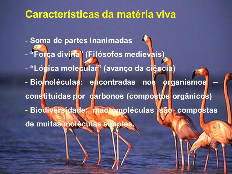 Características da matéria viva - Soma de partes inanimadas - Força divina (Filósofos medievais) - Lógica molecular (avanço da ciência) - Biomoléculas: encontradas nos organismos – constituídas por carbonos (compostos orgânicos) - Biodiversidade: macromoléculas são compostas de muitas moléculas simples.