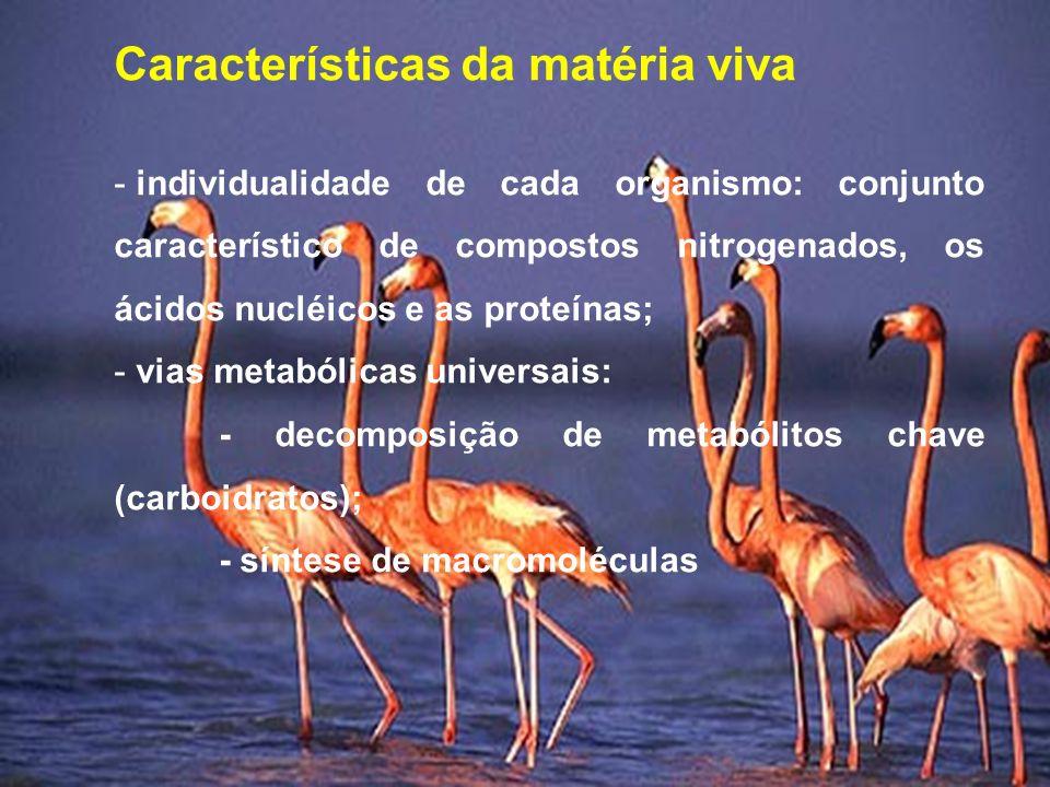 Características da matéria viva - individualidade de cada organismo: conjunto característico de compostos nitrogenados, os ácidos nucléicos e as prote
