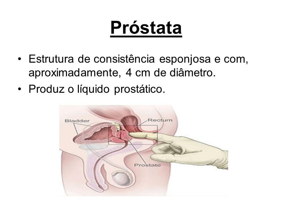 Próstata Estrutura de consistência esponjosa e com, aproximadamente, 4 cm de diâmetro. Produz o líquido prostático.