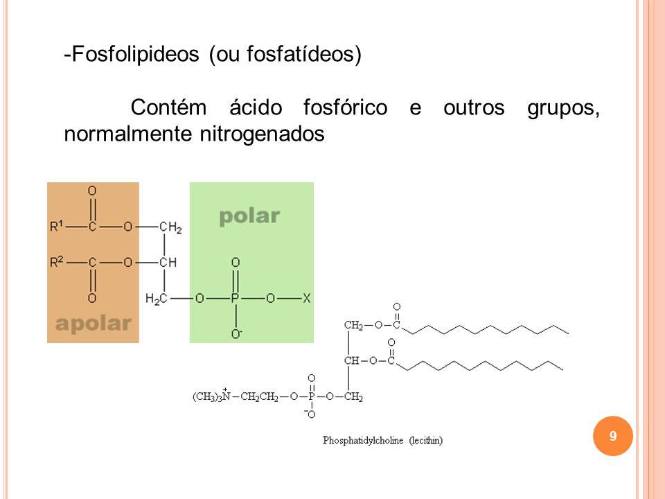 9 -Fosfolipideos (ou fosfatídeos) Contém ácido fosfórico e outros grupos, normalmente nitrogenados