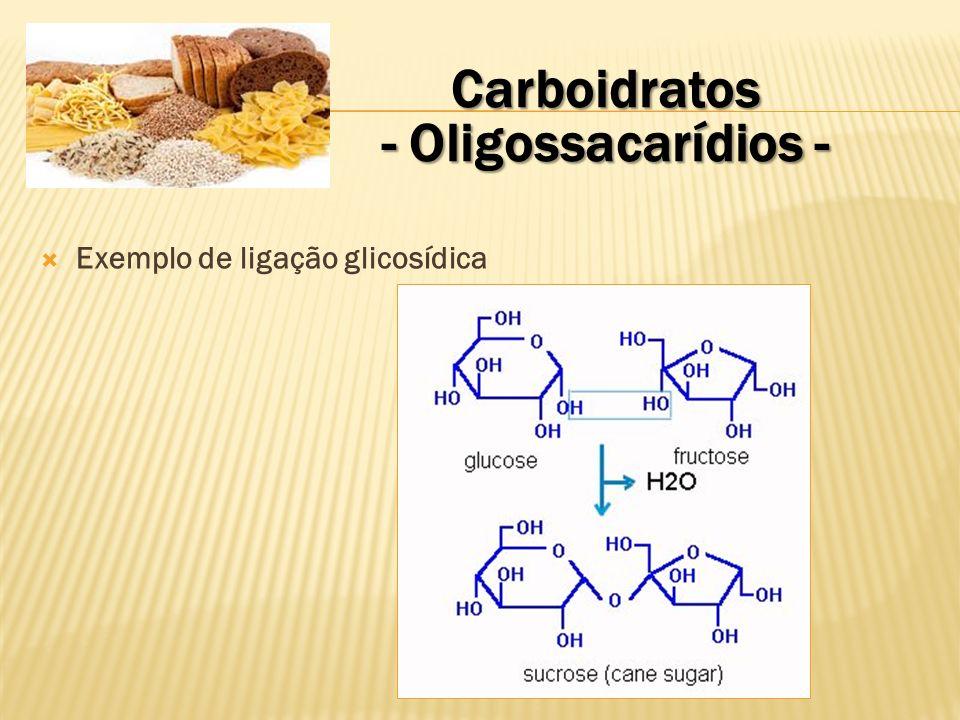 Carboidratos - Polissacarídios - Formados por mais de 10 monossacarídeos unidos por ligação glicosídica.
