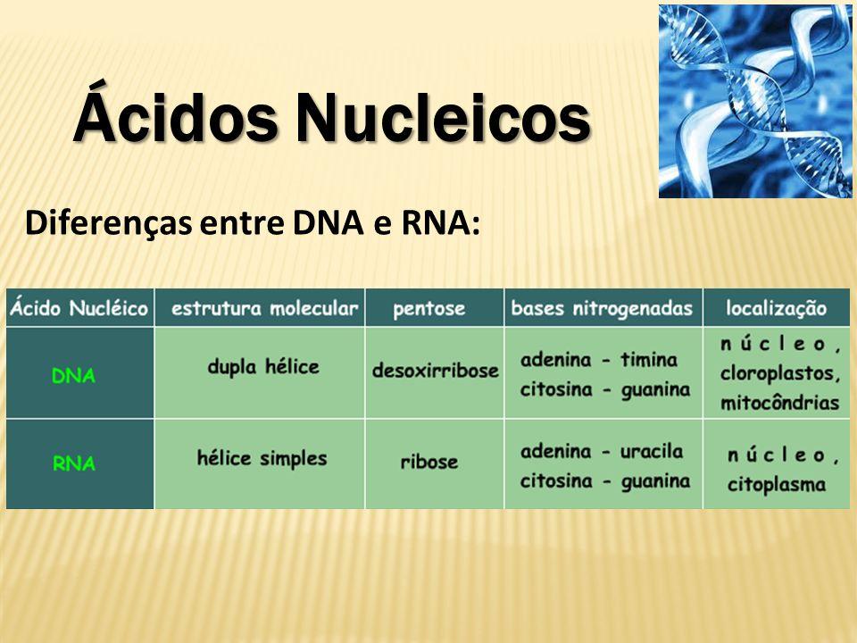 Diferenças entre DNA e RNA