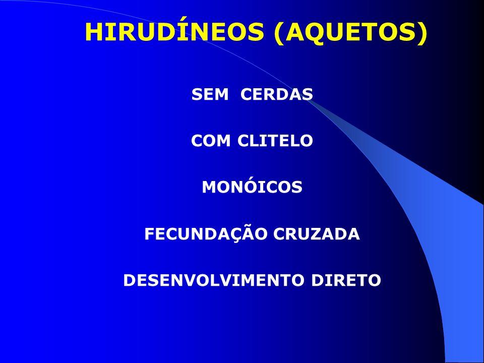 HIRUDÍNEOS (AQUETOS) SEM CERDAS COM CLITELO MONÓICOS FECUNDAÇÃO CRUZADA DESENVOLVIMENTO DIRETO