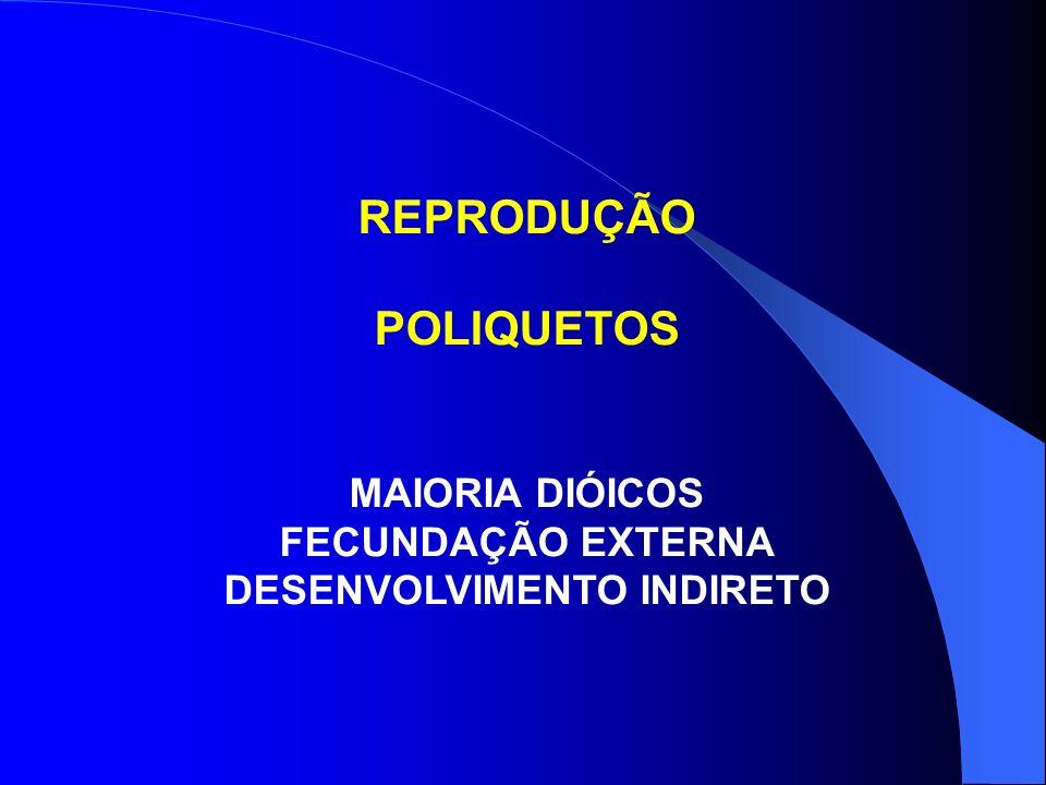 REPRODUÇÃO POLIQUETOS MAIORIA DIÓICOS FECUNDAÇÃO EXTERNA DESENVOLVIMENTO INDIRETO