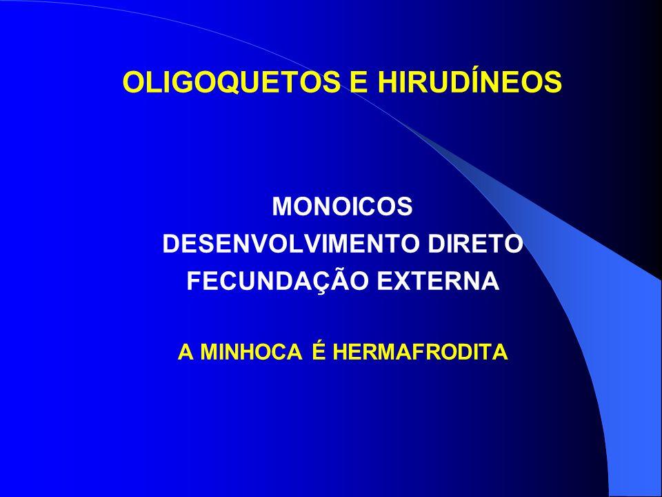 OLIGOQUETOS E HIRUDÍNEOS MONOICOS DESENVOLVIMENTO DIRETO FECUNDAÇÃO EXTERNA A MINHOCA É HERMAFRODITA