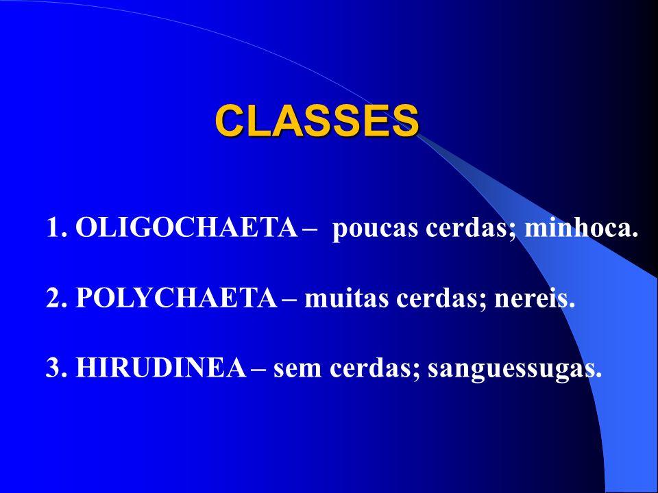 CLASSES 1.OLIGOCHAETA – poucas cerdas; minhoca. 2.