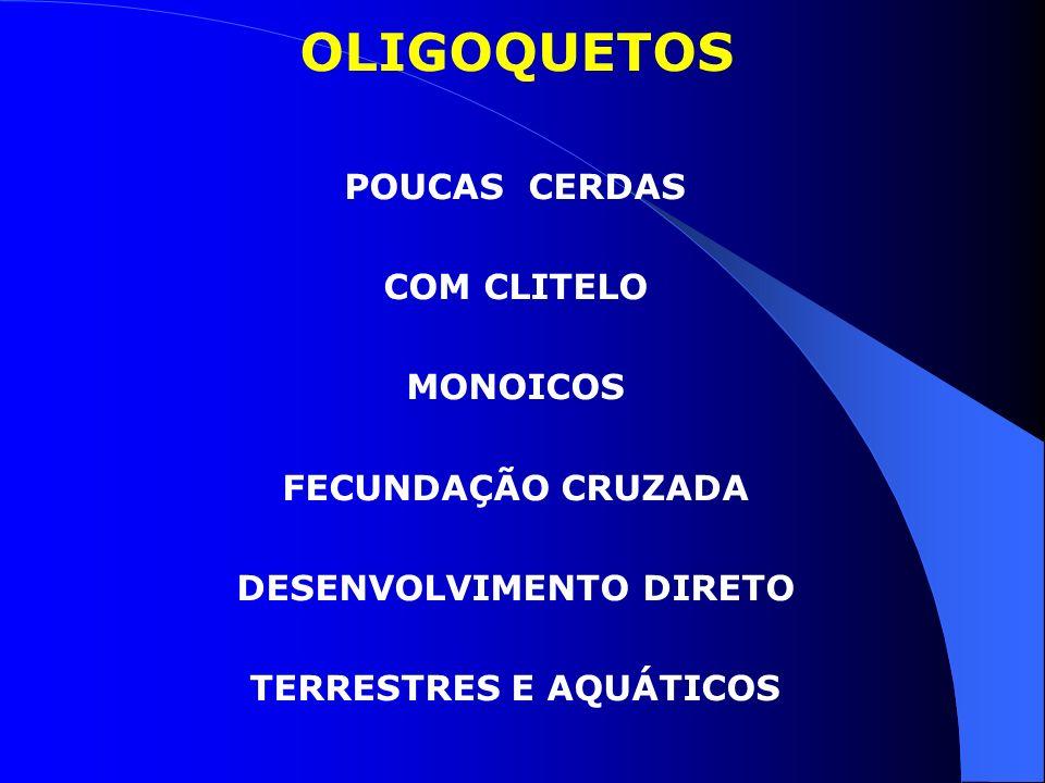 OLIGOQUETOS POUCAS CERDAS COM CLITELO MONOICOS FECUNDAÇÃO CRUZADA DESENVOLVIMENTO DIRETO TERRESTRES E AQUÁTICOS