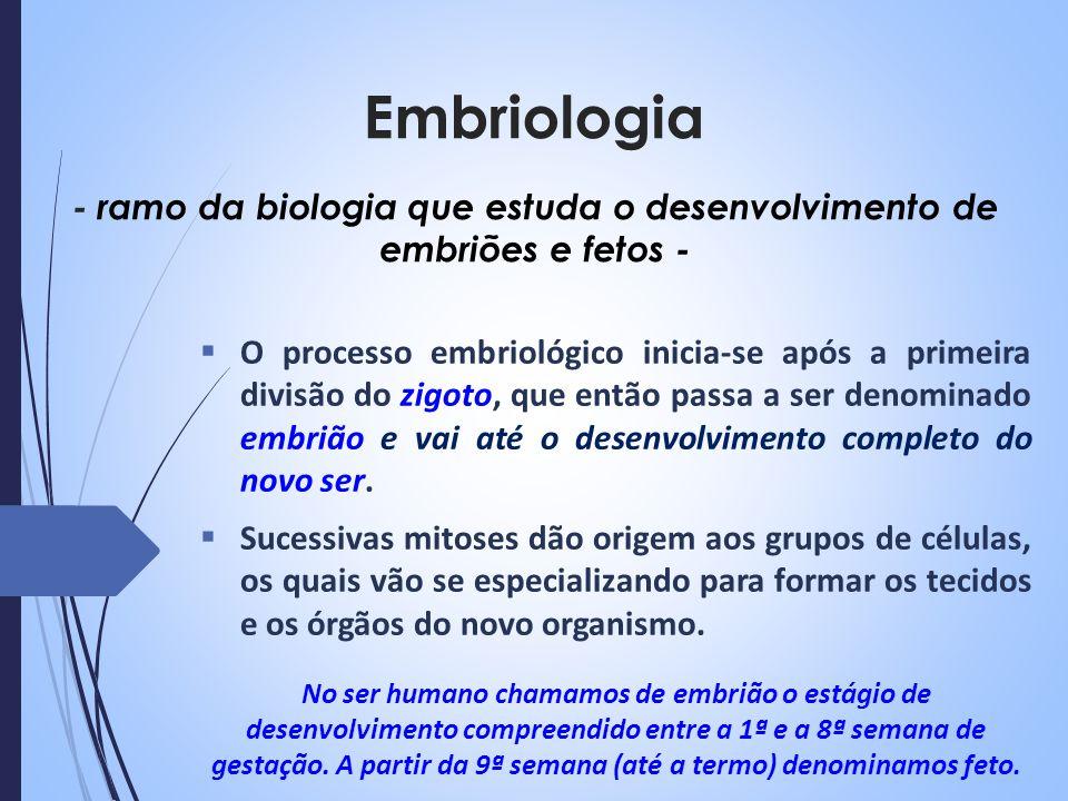 Embriologia O processo embriológico inicia-se após a primeira divisão do zigoto, que então passa a ser denominado embrião e vai até o desenvolvimento