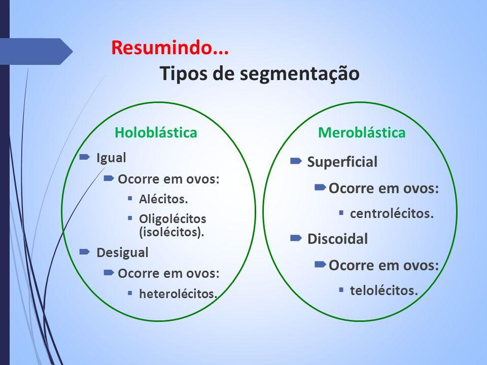 Resumindo... Tipos de segmentação Holoblástica Igual Ocorre em ovos: Alécitos. Oligolécitos (isolécitos). Desigual Ocorre em ovos: heterolécitos. Mero