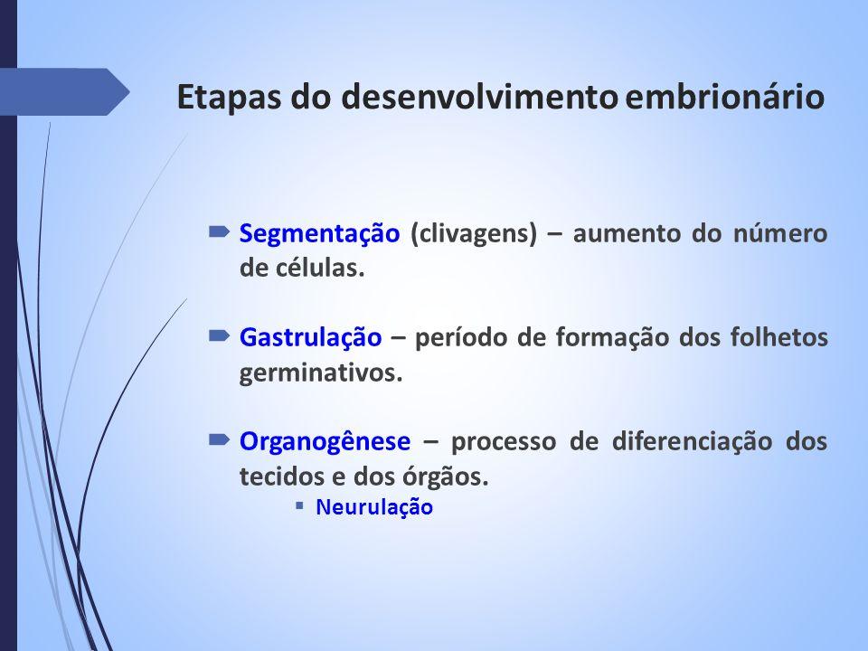 Organogênese em Anfioxo Ectoderma – tubo neural Endoderma – tubo digestório Mesoderma – somitos notocorda cavidades (celomas) Neurulação