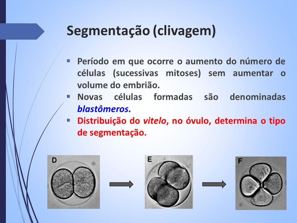 Segmentação MEROBLÁSTICA Há dois tipos básicos de segmentação meroblástica: DISCOIDALSUPERFICIAL Ocorre em ovos telolécito Divisões ocorrem na região da cicatrícula Ocorre em ovos centrolécitos Divisões ocorrem no núcleo que posteriormente migram para a periferia