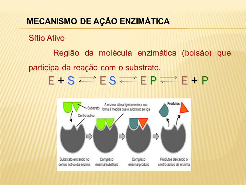MECANISMO DE AÇÃO ENZIMÁTICA Sítio Ativo Região da molécula enzimática (bolsão) que participa da reação com o substrato. E + S E S E P E + P