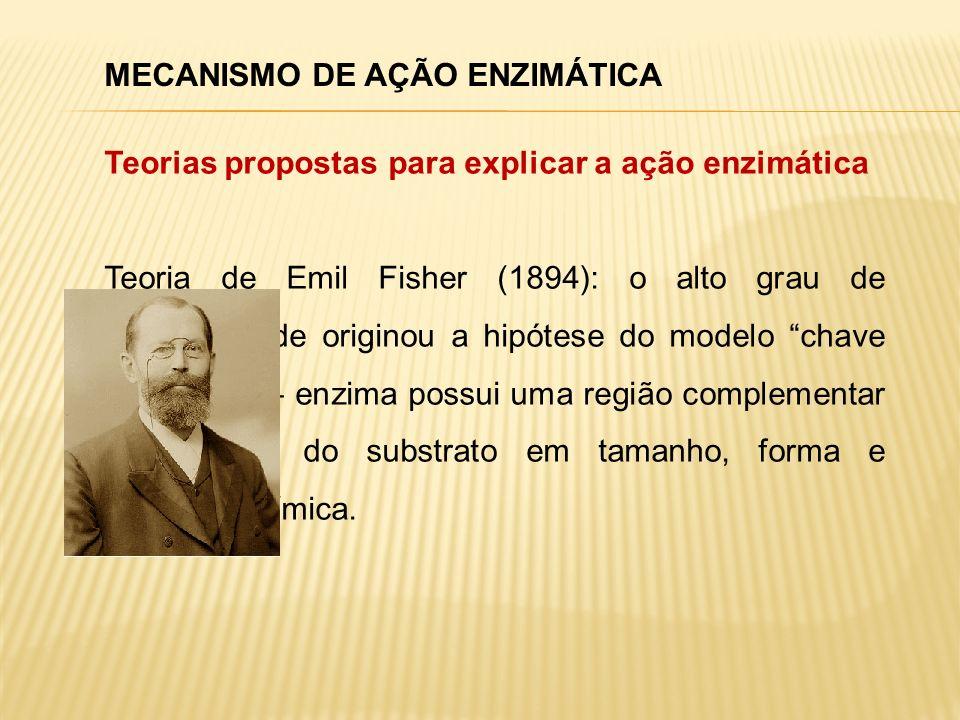 MECANISMO DE AÇÃO ENZIMÁTICA Teorias propostas para explicar a ação enzimática Teoria de Emil Fisher (1894): o alto grau de especificidade originou a