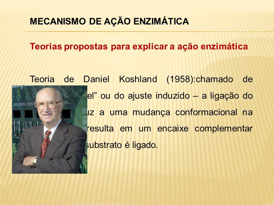 MECANISMO DE AÇÃO ENZIMÁTICA Teorias propostas para explicar a ação enzimática Teoria de Daniel Koshland (1958):chamado de enzima flexível ou do ajust