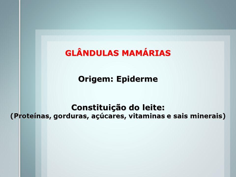 GLÂNDULAS MAMÁRIAS Origem: Epiderme Constituição do leite: (Proteínas, gorduras, açúcares, vitaminas e sais minerais)