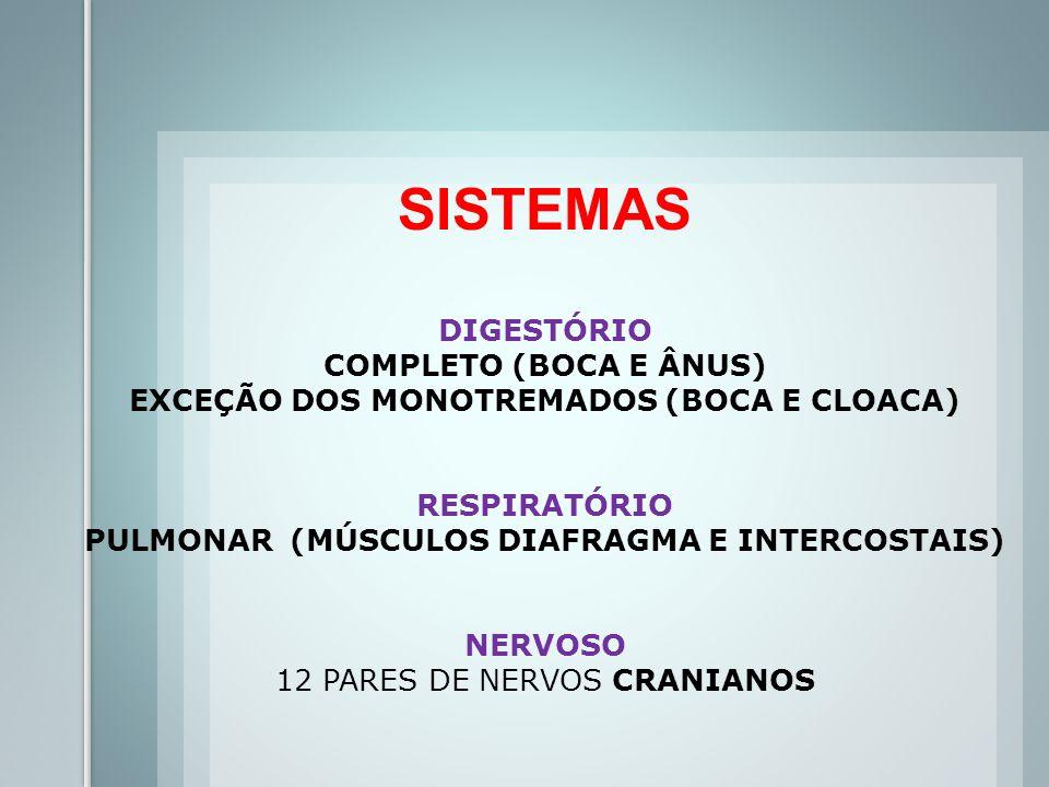 SISTEMAS DIGESTÓRIO COMPLETO (BOCA E ÂNUS) EXCEÇÃO DOS MONOTREMADOS (BOCA E CLOACA) RESPIRATÓRIO PULMONAR (MÚSCULOS DIAFRAGMA E INTERCOSTAIS) NERVOSO