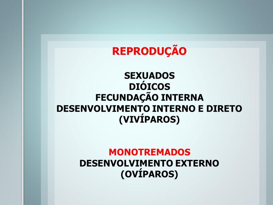 REPRODUÇÃO SEXUADOS DIÓICOS FECUNDAÇÃO INTERNA DESENVOLVIMENTO INTERNO E DIRETO (VIVÍPAROS) MONOTREMADOS DESENVOLVIMENTO EXTERNO (OVÍPAROS)