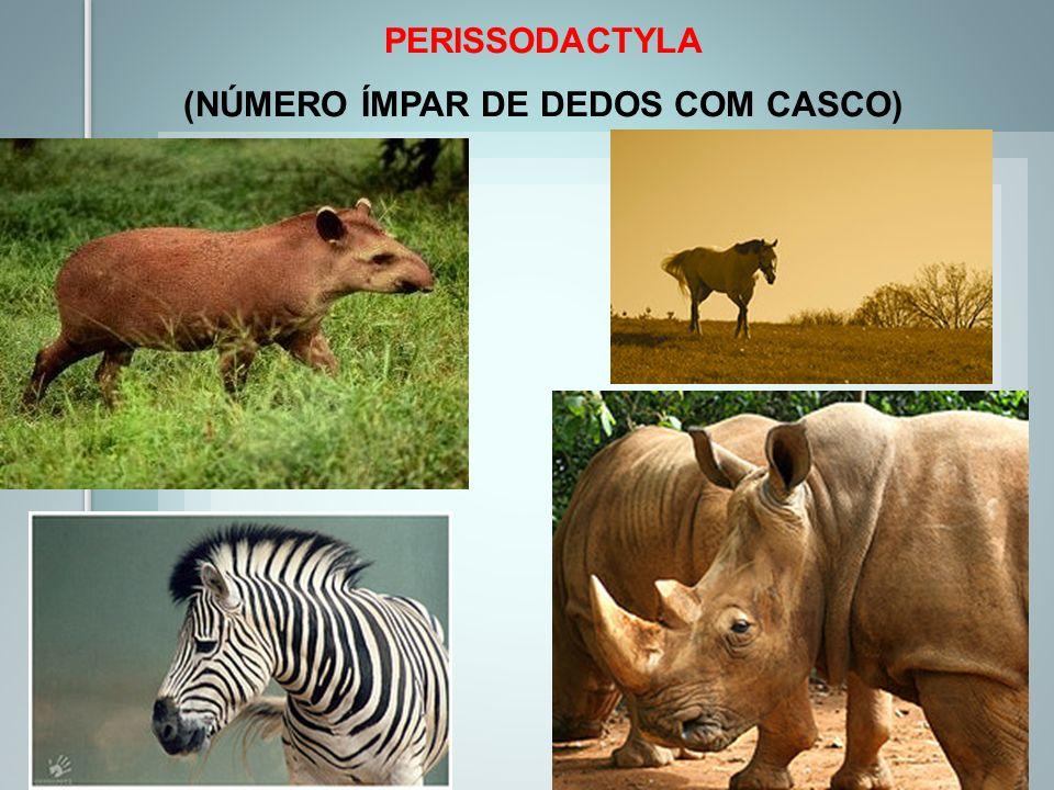 PERISSODACTYLA (NÚMERO ÍMPAR DE DEDOS COM CASCO)