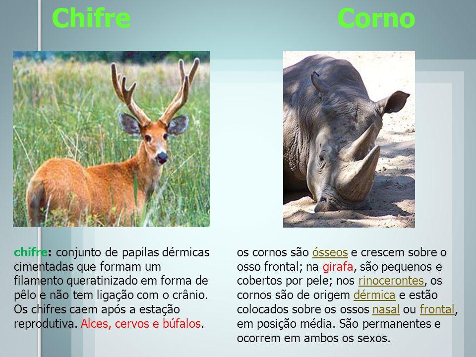 Chifre Corno os cornos são ósseos e crescem sobre o osso frontal; na girafa, são pequenos e cobertos por pele; nos rinocerontes, os cornos são de orig