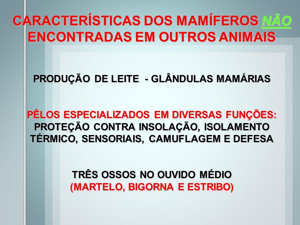 CARACTERÍSTICAS DOS MAMÍFEROS NÃO ENCONTRADAS EM OUTROS ANIMAIS PRODUÇÃO DE LEITE - GLÂNDULAS MAMÁRIAS PÊLOS ESPECIALIZADOS EM DIVERSAS FUNÇÕES: PROTE