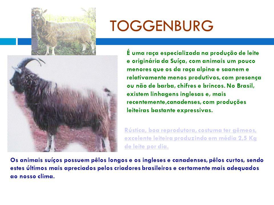 TOGGENBURG É uma raça especializada na produção de leite e originária da Suíça, com animais um pouco menores que os da raça alpina e saanem e relativamente menos produtivos, com presença ou não de barba, chifres e brincos.