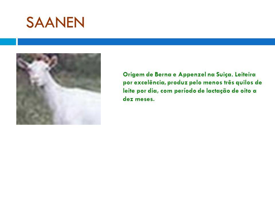 SAANEN Origem de Berna e Appenzel na Suiça. Leiteira por excelência, produz pelo menos três quilos de leite por dia, com período de lactação de oito a