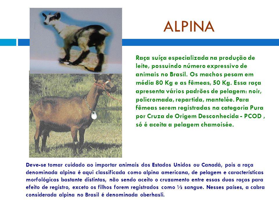 ALPINA Raça suíça especializada na produção de leite, possuindo número expressivo de animais no Brasil. Os machos pesam em média 80 Kg e as fêmeas, 50