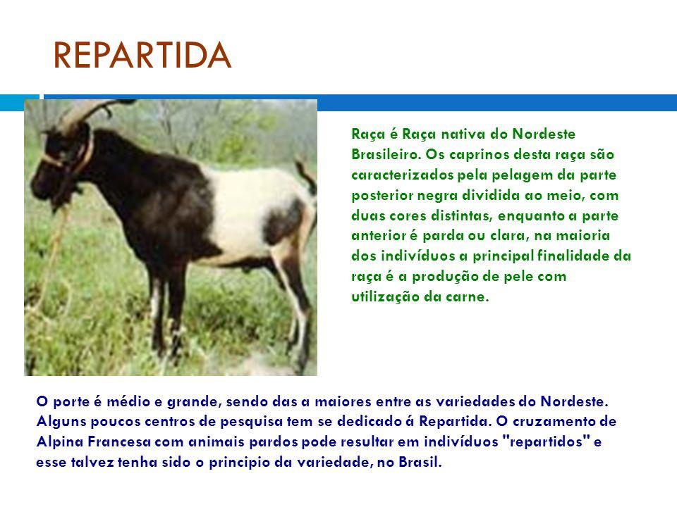 Raça é Raça nativa do Nordeste Brasileiro. Os caprinos desta raça são caracterizados pela pelagem da parte posterior negra dividida ao meio, com duas