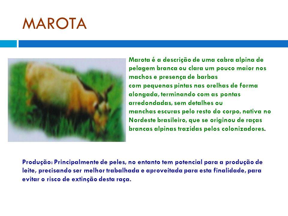 MAROTA Marota é a descrição de uma cabra alpina de pelagem branca ou clara um pouco maior nos machos e presença de barbas com pequenas pintas nas orel